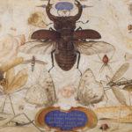 Leggere, osservare. Con Jean-Henri Fabre tra gli insetti, in bilico tra meraviglia e horror